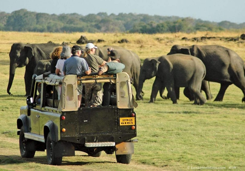 Authorities take steps to limit number of vehicles entering Yala National Park
