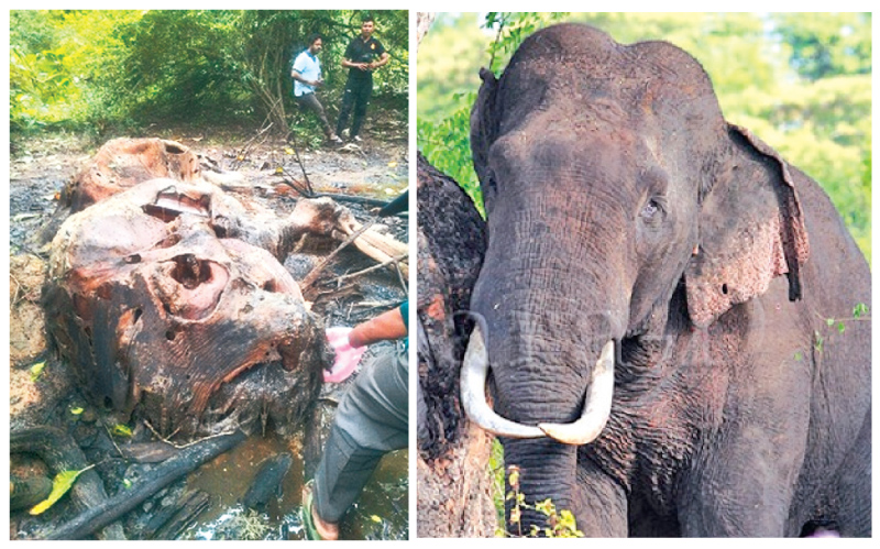 Wildlife Ministry to take tough action against elephant hunters