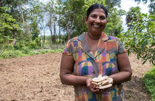 UNDP Community Forestry Project replants forests in Sri Lanka
