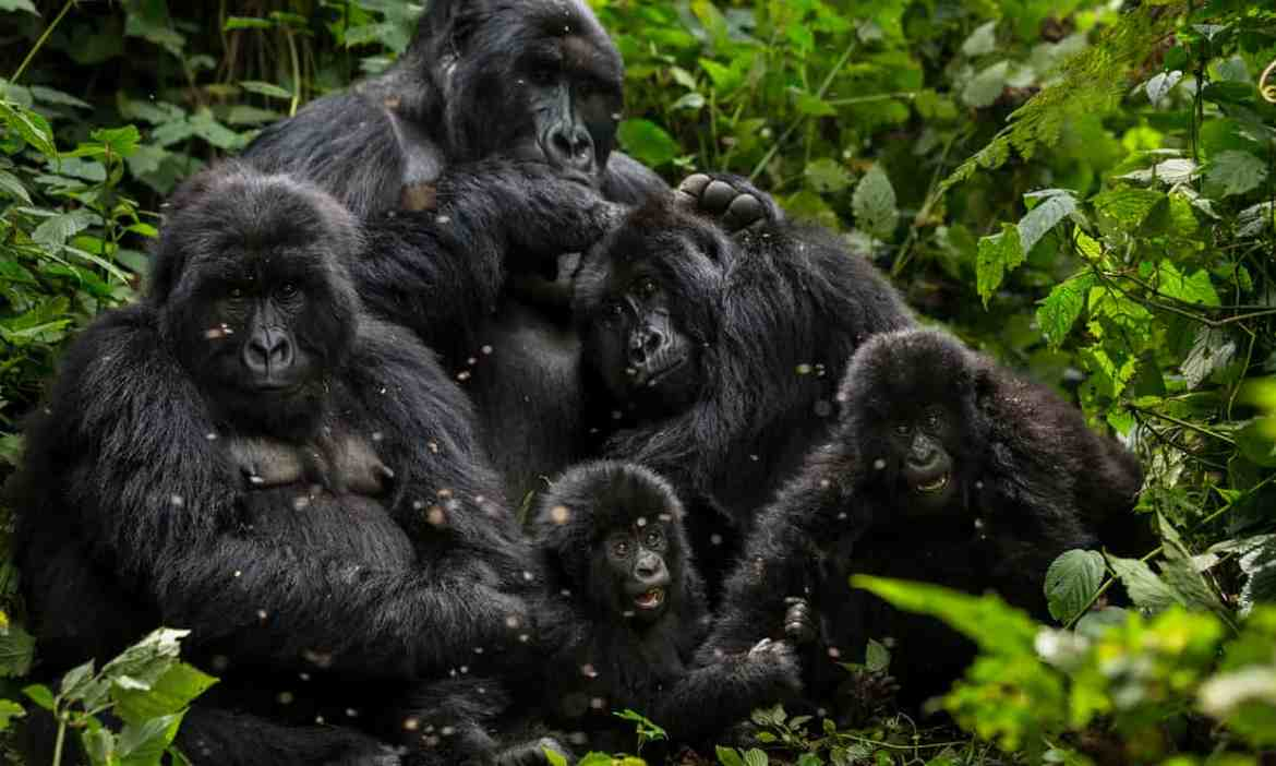 Outrage over alleged plan to export rare animals from Congo to China
