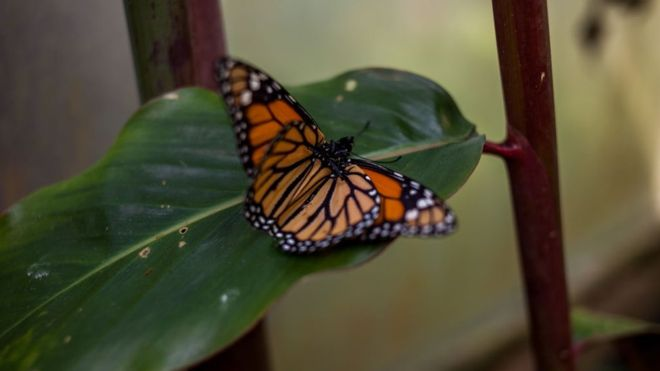 Missing Mexican butterfly activist found dead