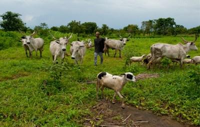 Image result for Farmer-herder crisis