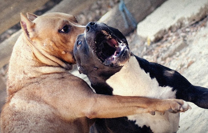 Image result for dog fighting