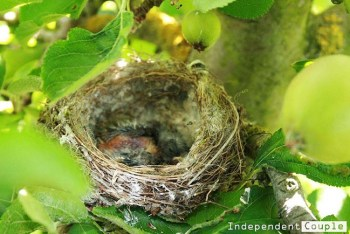 Among the trees, you can see various beautiful things of nature, like this cute baby bird in the nest.