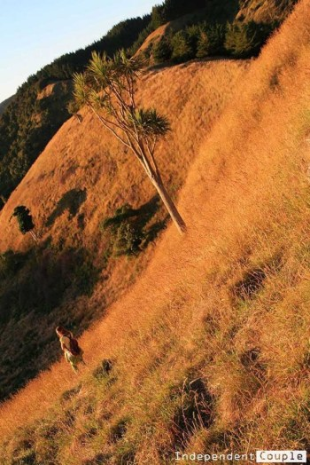 Waipataki Hill
