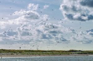 independentpeople denmark skagen sea