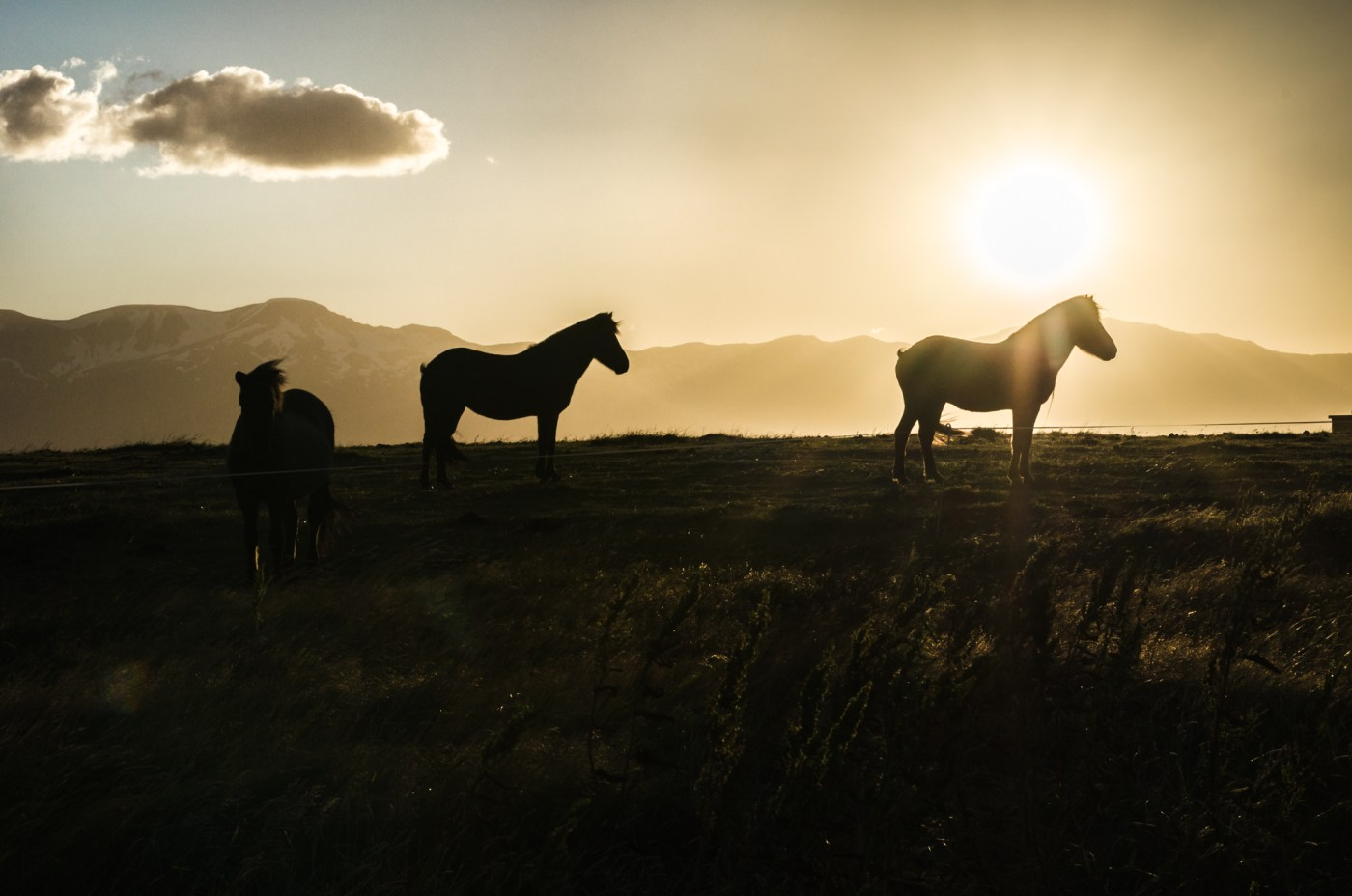 independent people iceland scenery horse sunset