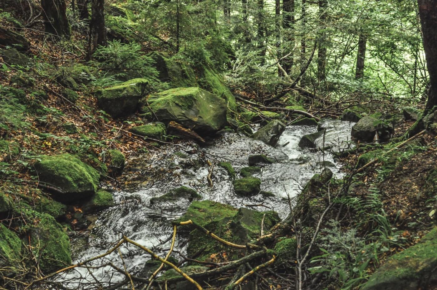 Carpathian mountains in Ukraine