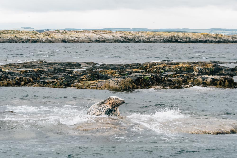 england northumberland islands farne sea seals