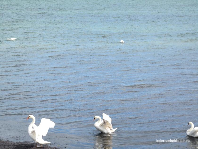 Schwanensee