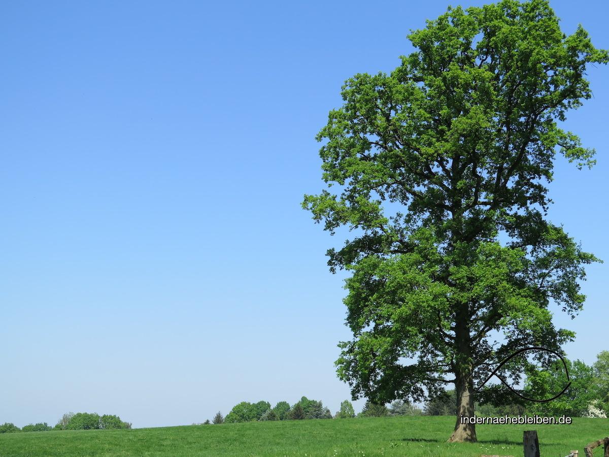 Dat Ole Hus: der Waffelhimmel im Grünen Herzen Schleswig-Holsteins