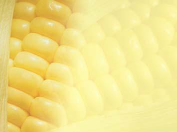 Corn 01 PowerPoint Template