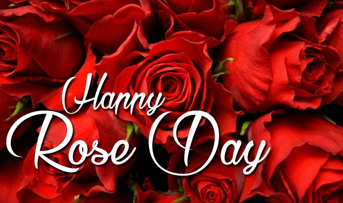Happy Rose Day 2016 Importance And Significance Of Each