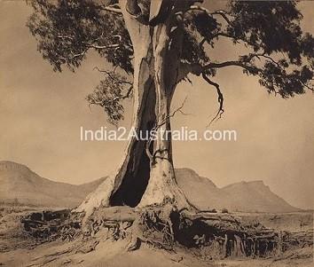 Australia and the Gum Tree