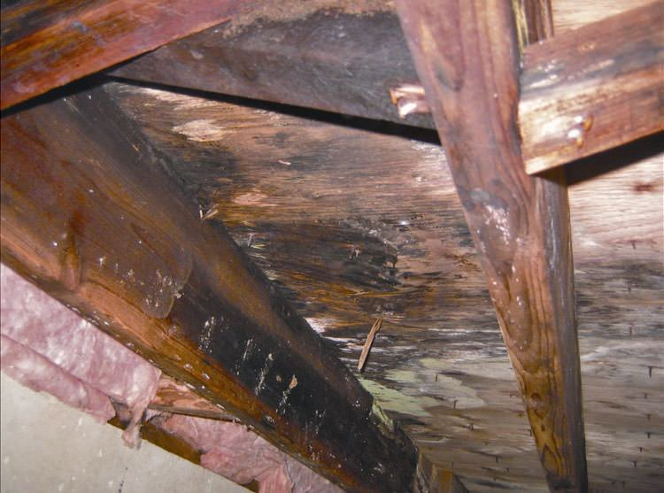 mold rot in crawlspace