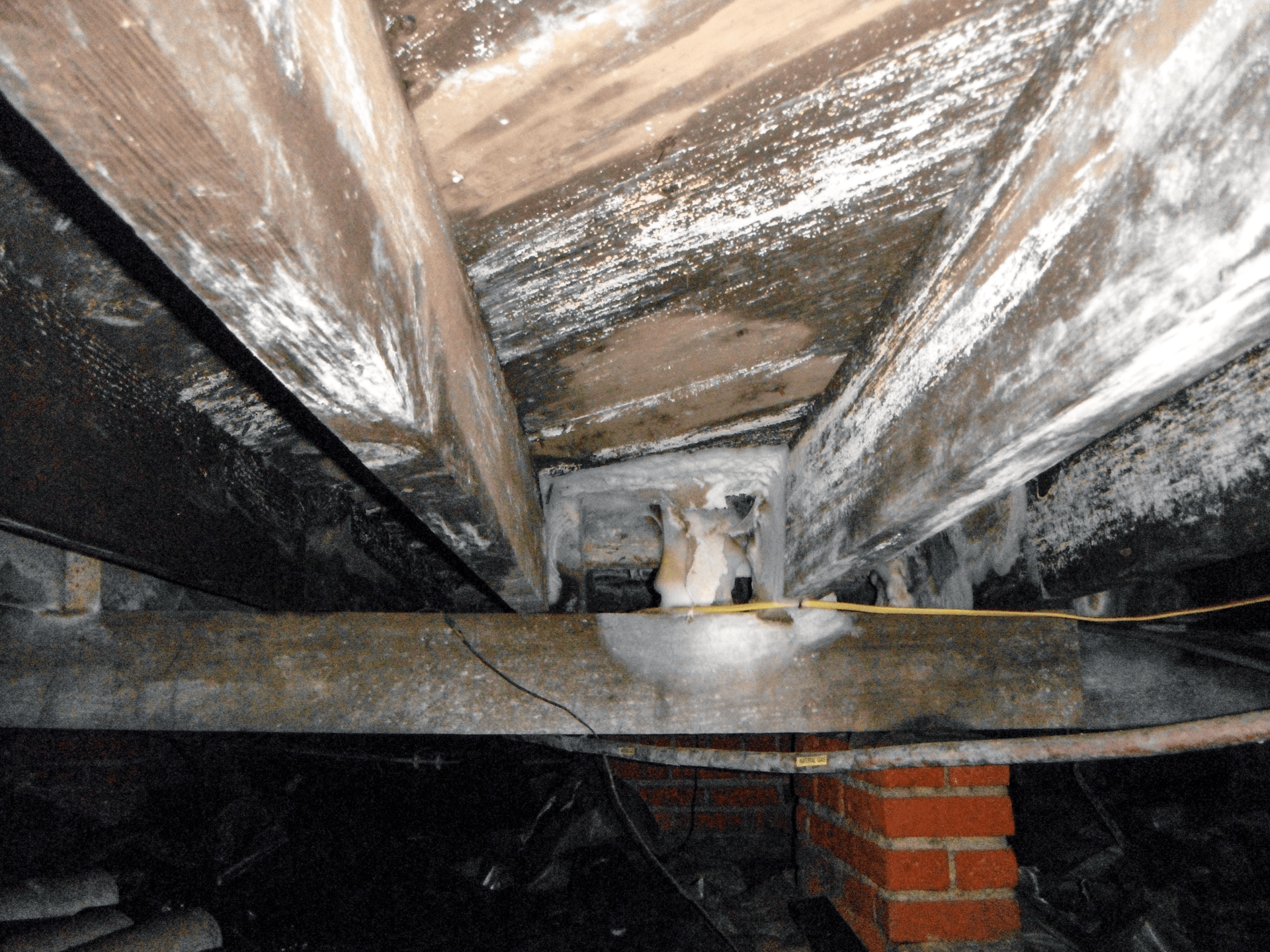 wood fungus on crawl space with mold and moisture