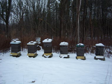 Beekeeping Tips for February