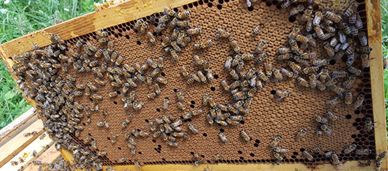 Beekeeping Tips for August