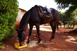 Sweep Forward......the first horse I rode in Madagascar, a true legend.