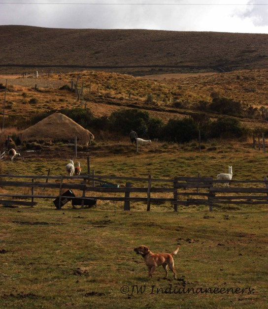 The views from Hacienda El Porvenir located at the base of Cotopaxi.