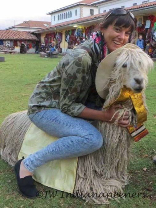 When you can't find a horse hitch a ride on a llama!