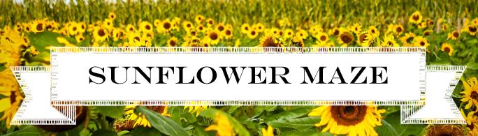 Sunflower Maze Indianapolis Indiana