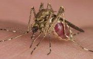 Zika Virus -indianbureaucracy