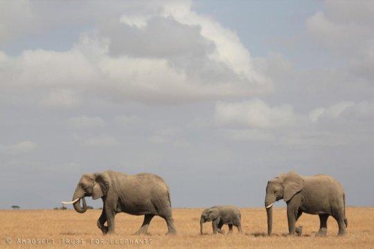 Elephant Welfare Project_indianbureaucracy