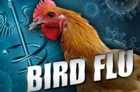 bird-flu_indianbureaucracy