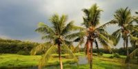 Steps to promote coconut farming in Kerala -indian bureaucracy