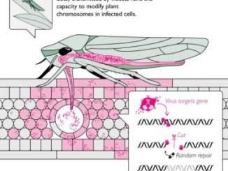 biological warfare with insects