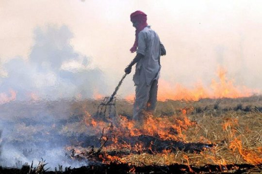 Crop residue burning is a major contributor to air pollution