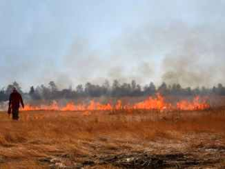 Outline governance & policy approaches to better manage wildfires