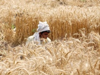 In wake of COVID-19 spread, ICAR issues Advisory to farmers for Rabi crops