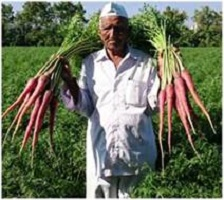Biofortified carrot variety developed by farmer