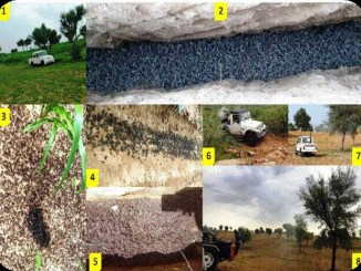 Locust control operations undertaken in more than 5.22 lakh hectares