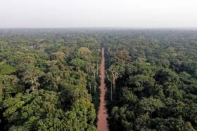 Central African forests