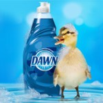 dawn-saves-wildlife-med