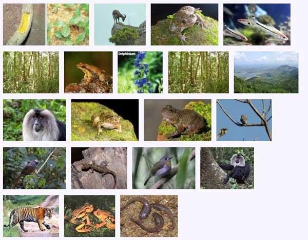west_ghats_ecology_animals_screenshot_02