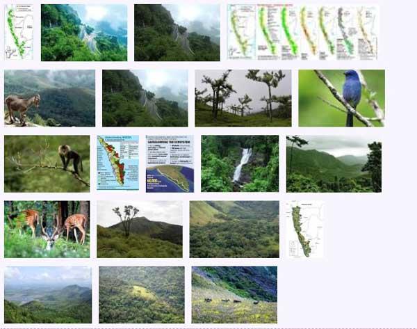 west_ghats_ecology_animals_screenshot_08