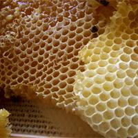 honeybusiness-kerala2