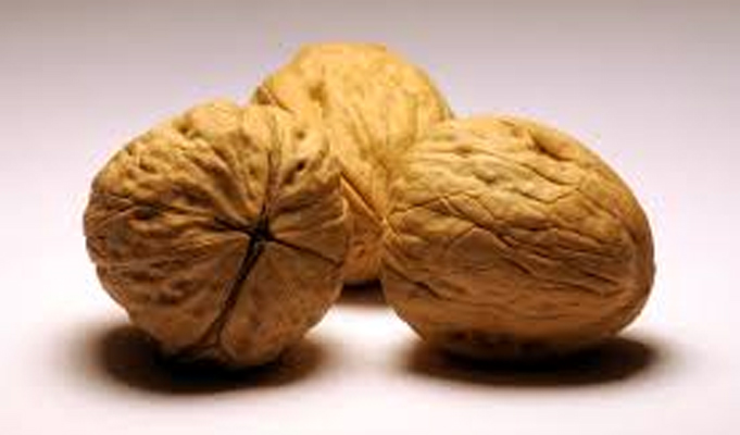 The Indian connect to California walnuts