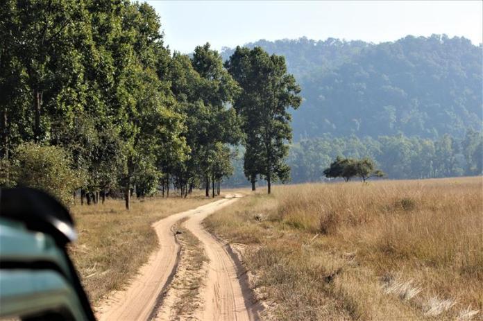 Grasslands of Tala