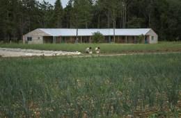esidential Education Area Abbey Home Farm