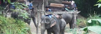 Elefanti Thailandia – REALTA'