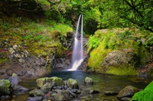 Walking Tour _Levad do Ribeiro Frio Madeira Portogallo cosa vedere e fare