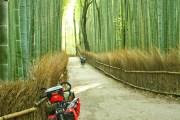 foresta di bambu kyoto giappone ARASHIYAMA