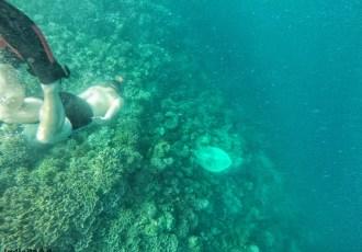 moalboal sardine snorkeling filippine cebu