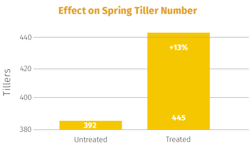 This graph shows an increase in Spring tiller numbers after recommended applications of Solar Pro-Active OneShot
