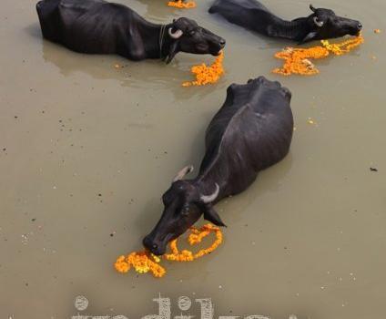 Benares, reportage fotografico dalla Città della Luce